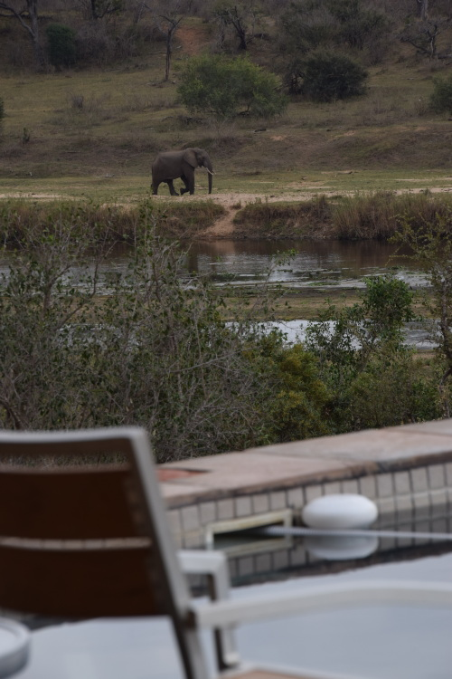 Elephant strolling by - the view from the pool